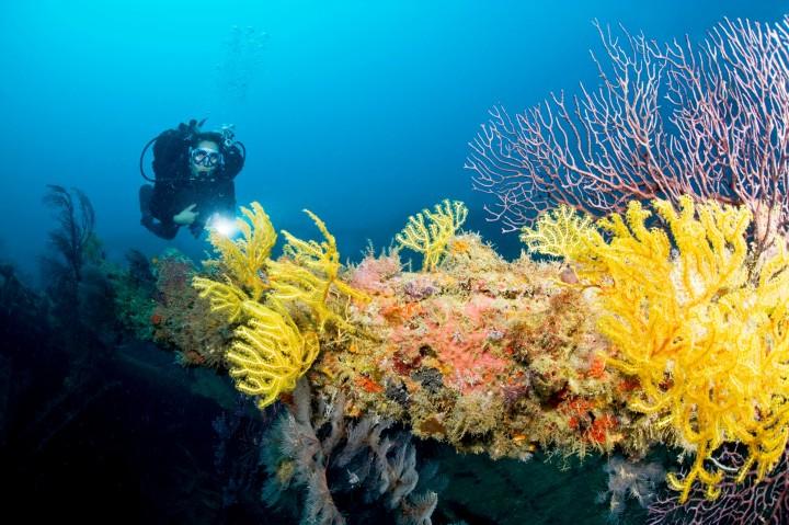 dive_corals