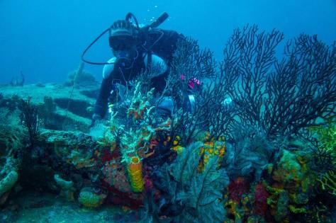 Credit True Blue Bay Boutique Resort bianca c diving (1)