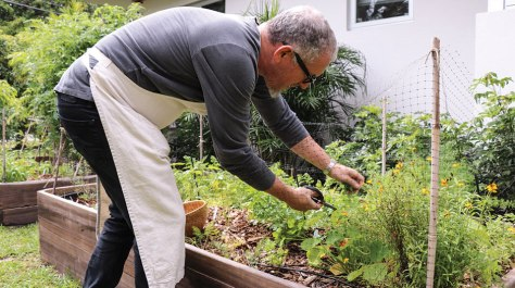 James Beard award winning chef Michael Schwartz in his herb garden